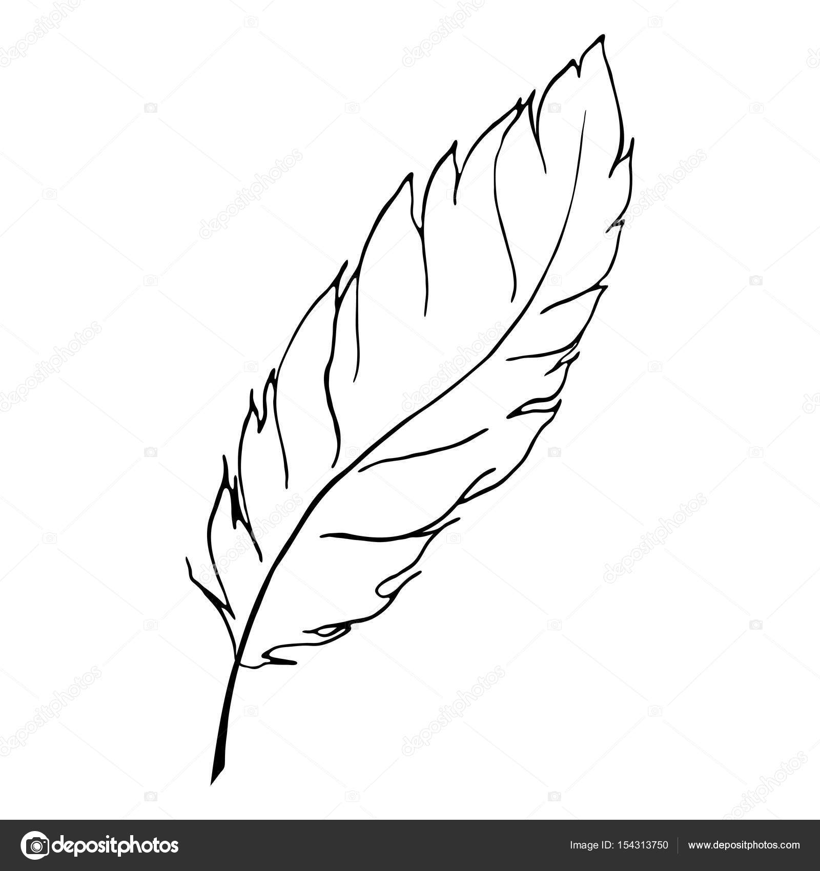 Monochrome Black And White Bird Feather Line Art Vector Stock