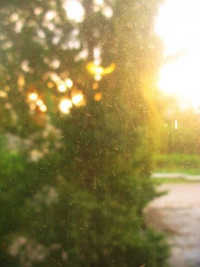 Nature after rain. Dry raindrops on the window glass photo
