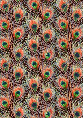 Rainbow colorful peacock bird feather background pattern texture