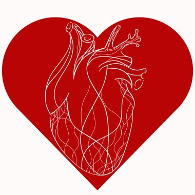 realistic stylized heart