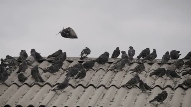 A flock of pigeons sitting on a roof