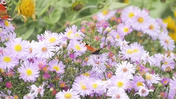pillangó és virág
