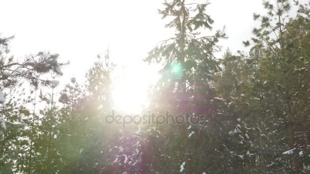 Téli fenyő erdő a hó a napsütésben