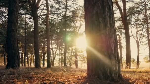 foresta dautunno al tramonto