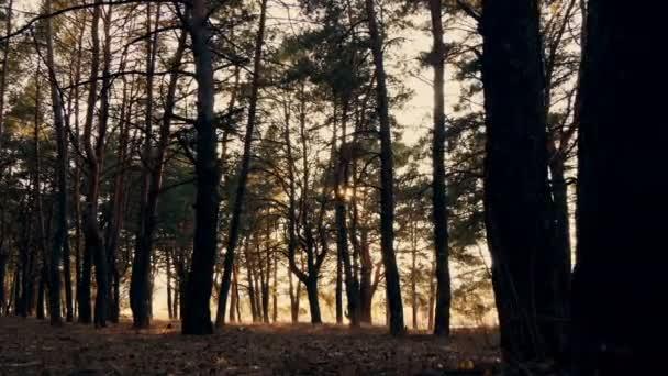 Őszi erdő naplementekor