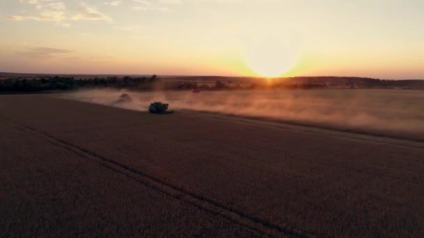 Luftaufnahmen mit einer Drohne bei der Arbeit in einem Weizenfeld bei Sonnenuntergang