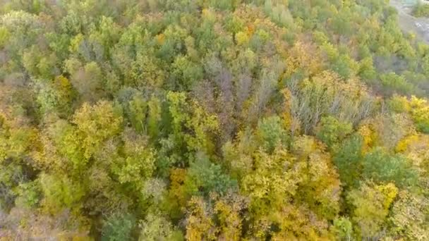 Autumn forest aerial photography. A drone flies over a forest and a mountain on a sunny day