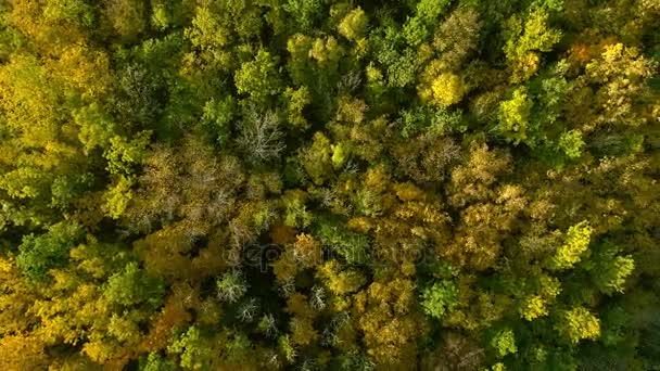 Autumn Forest Aerial Photography A Drone Flies Over And Mountain On