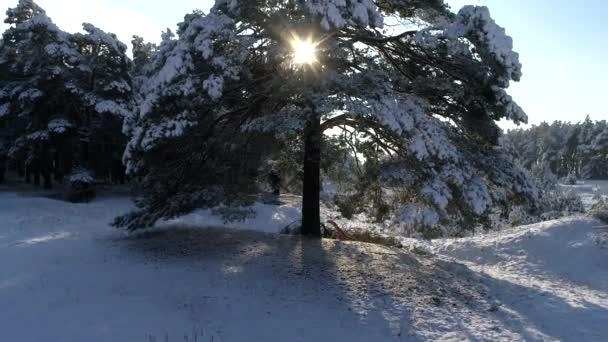 Letecké fotografie z jehličnatého lesa vánoční zimní sníh