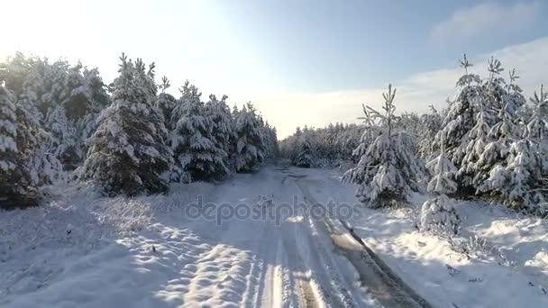Luftaufnahmen des Winters Schnee Weihnachten Nadelwald