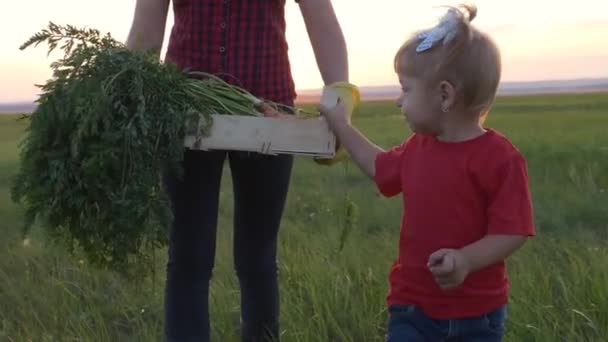 Boldog családi anya és lánya a mezőn naplementekor zöldségeket szüretelnek. Egy boldog család csapatmunkája a terepen. Mezőgazdasági családi munka. Egészséges táplálkozás koncepciója