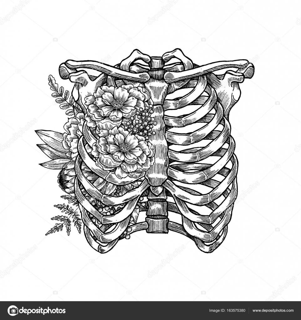 Tatuaje vintage ilustración floral anatomía. Esqueleto del tórax ...