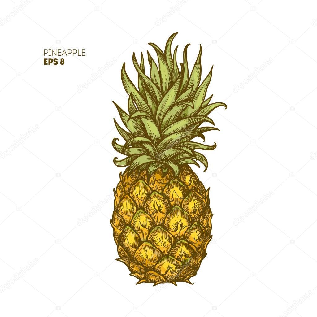 Colored pineapple illustration. Vintage tropical fruit. Vector illustration