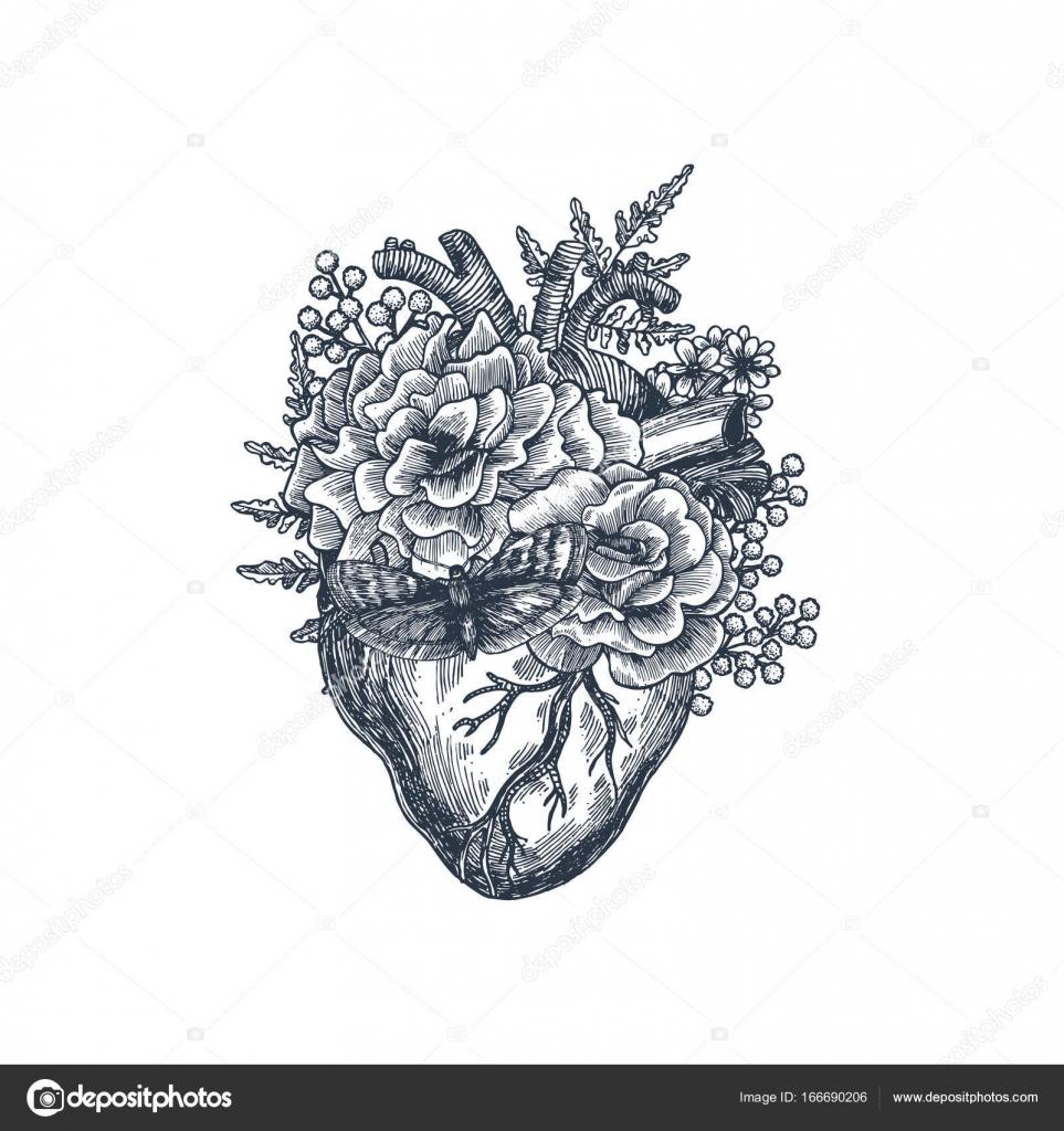 Tattoo Vintage Illustration Anatomie. Floral anatomischen Herz ...