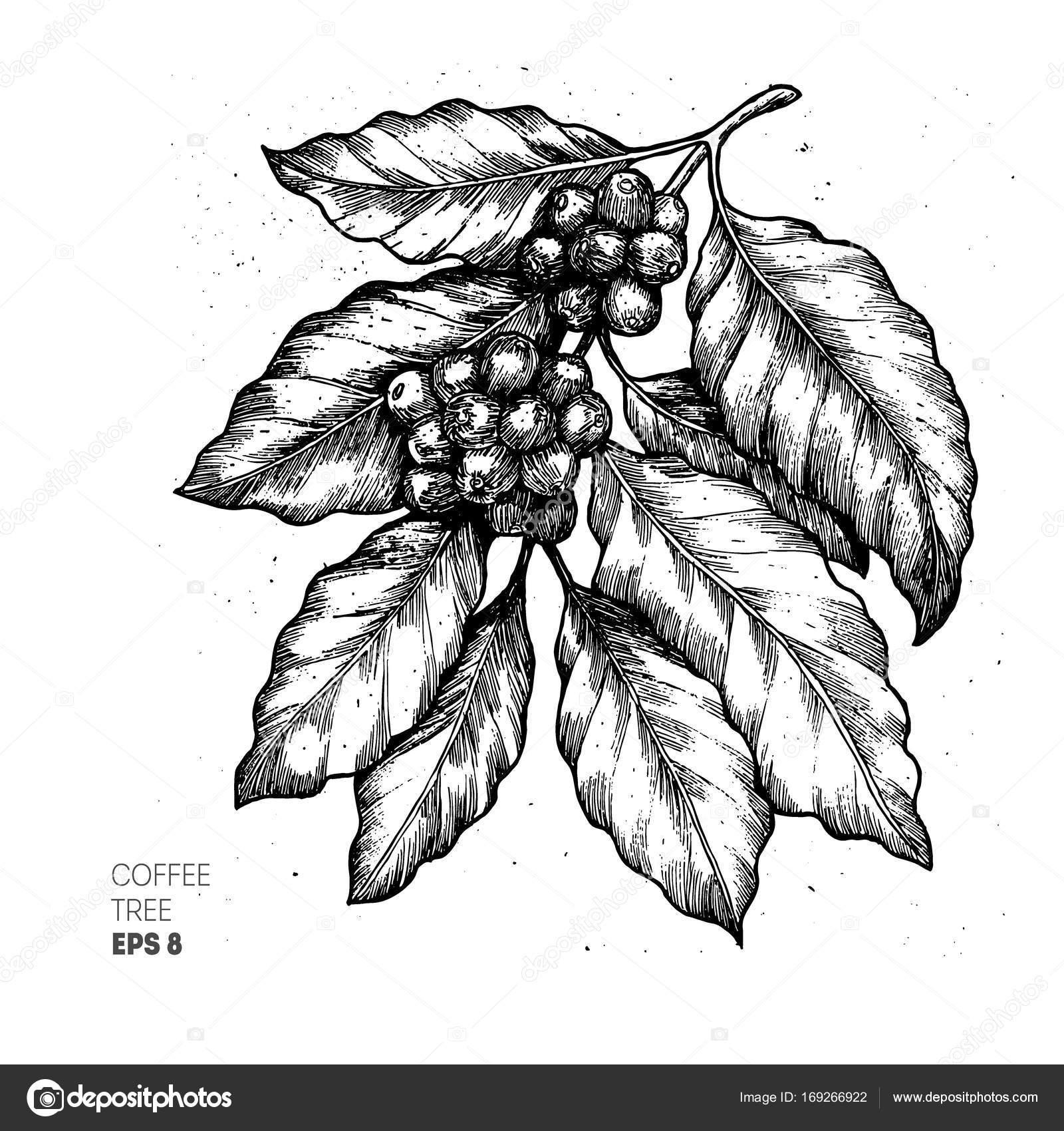 Coffee tree illustration engraved style illustration vintage coffee tree illustration engraved style illustration vintage coffee vector illustration stock vector altavistaventures Gallery