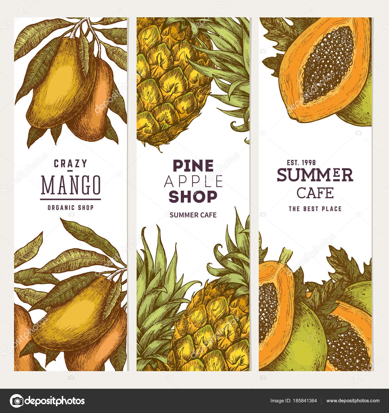 Piña, Mango, colección de Papya fruta bandera. Plantillas de diseño ...