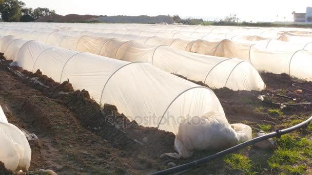 Polythentunnel als Plastikgewächshaus in einer Kleingartenanlage mit Gemüseanbau bei Sonnenuntergang.