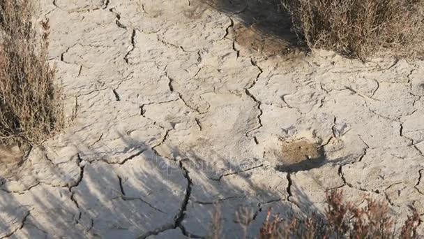 Sušené suché půdy v poušti