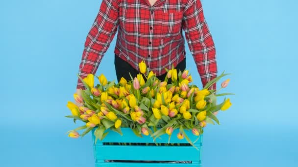 Young woman holding a box with tulips on a blue background