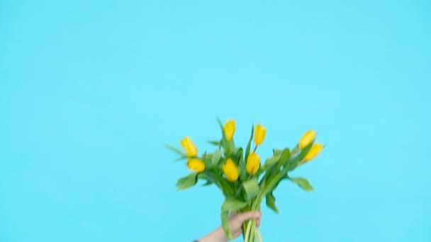 Bouquet of yellow tulips in a female hand on a blue background