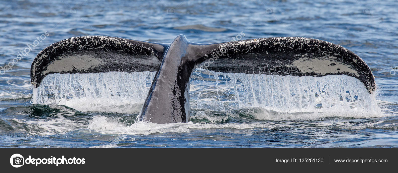 Tail of humpback whale — Fotografia de Stock
