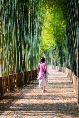 Woman walking at Bamboo Forest in Chiang Mai,Thailand.