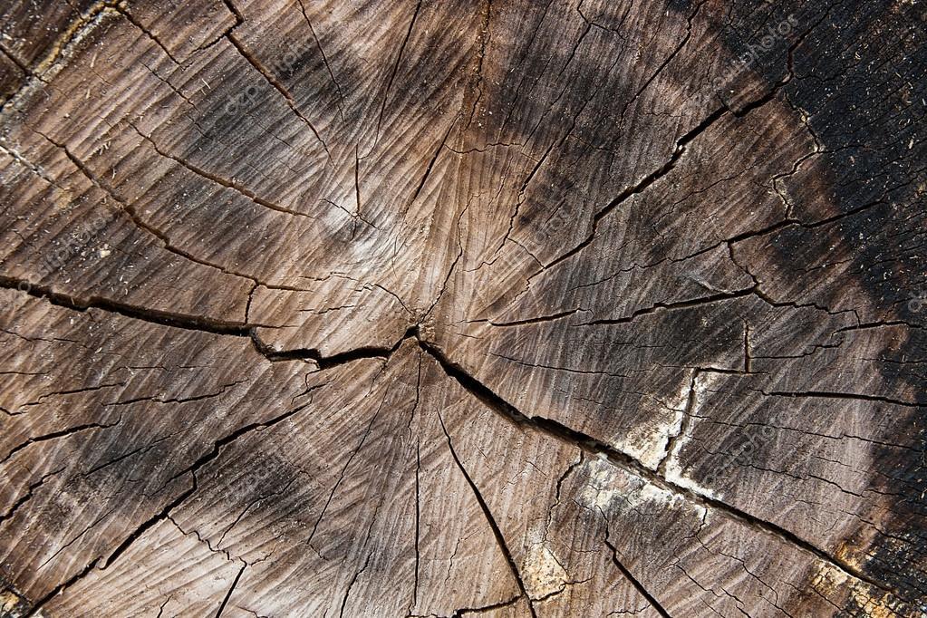 texture du bois de tronc d arbre coup mousse et champignon qui se d veloppe sur th. Black Bedroom Furniture Sets. Home Design Ideas