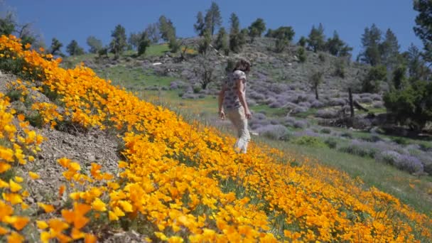 Hiker enjoys a visit to a field of bright orange California poppies