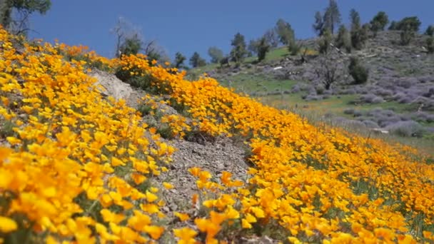 Flowers in Los Padres national forest