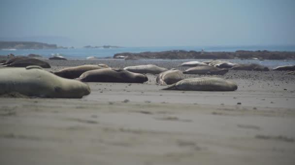Nízký úhel pohledu elephant Seals poblíž San Simeon Kalifornie