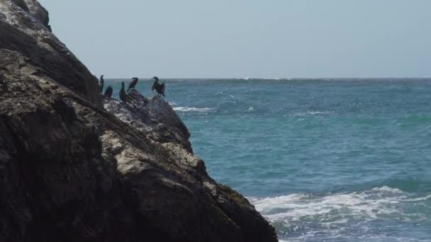Kormorána sluncí přímo na skalách u Spooners Cove Beach