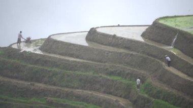Zhuang rice farmers working hillside