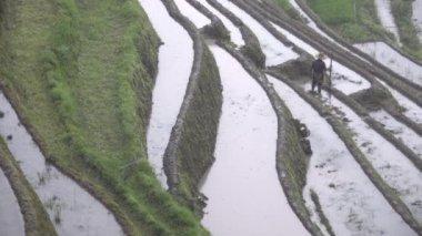 Lone Zhuang rice farmer works terrace