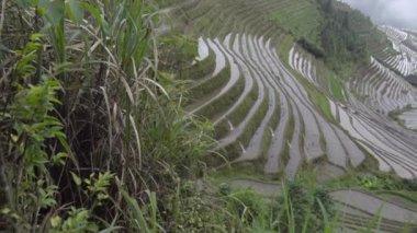 Pan of Ping An rice paddies