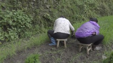 Two Chinese female farmers working the land