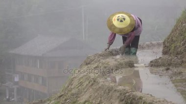 Hard working Chinese farmer in a rice field