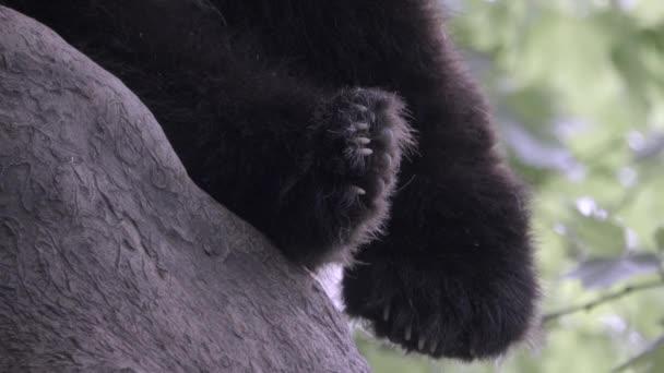 Fuzzy Panda tlapky jako spící medvěd