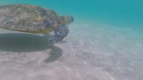 Sea turtle swims alongside camera