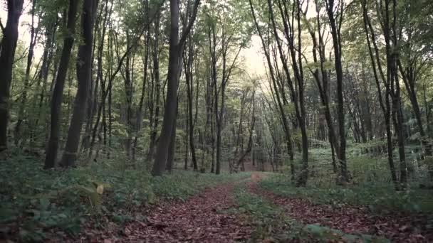 Divoký soumrak lesních stromů