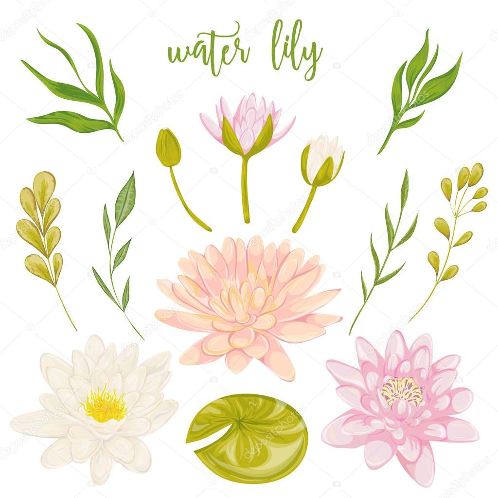 Water lily set collection floral decorative design elements for collection floral decorative design elements for wedding invitations and birthday cards flowers leaves and buds vintage hand drawn vector illustration in izmirmasajfo