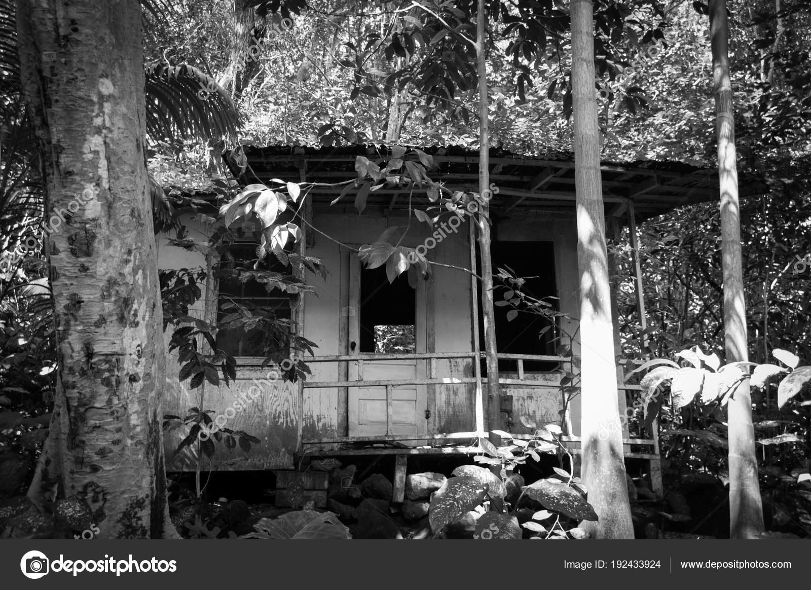Black and white jungle shack photo by daniel wedekingyahoo com