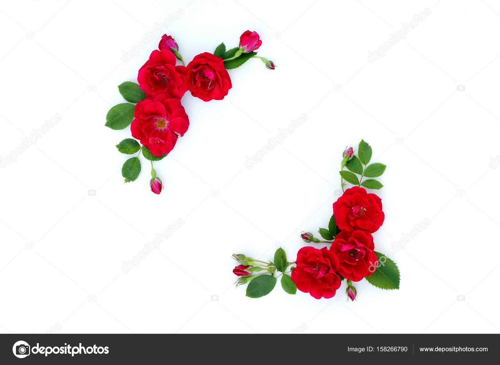 marco de rosas rojas sobre un fondo blanco con espacio para texto foto de stock
