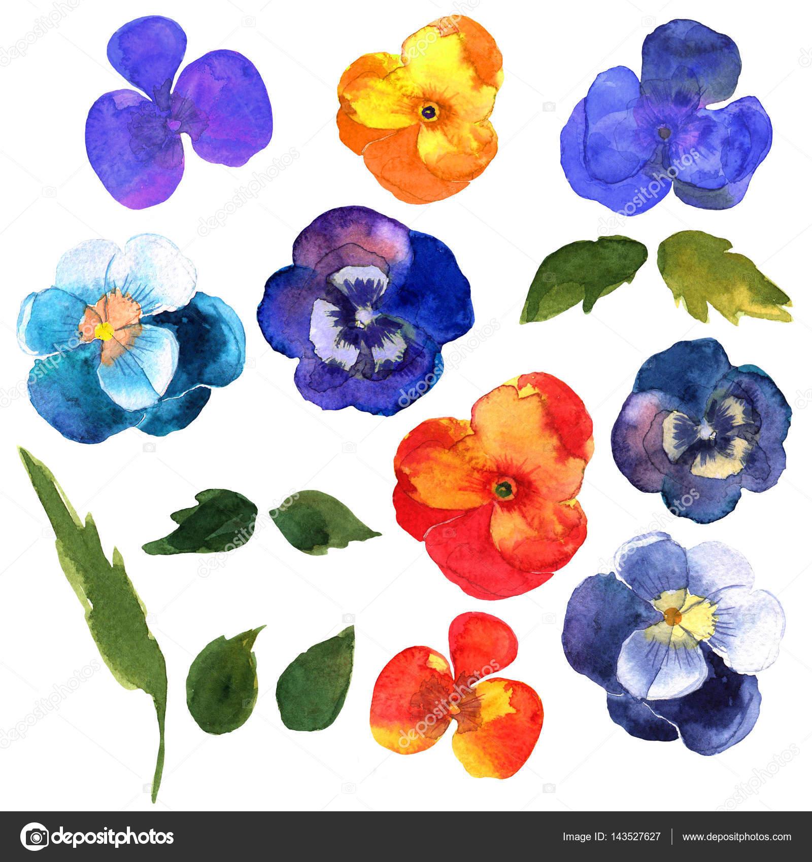Dibujos A Color De Flores Conjunto Floral Colección Con Flores
