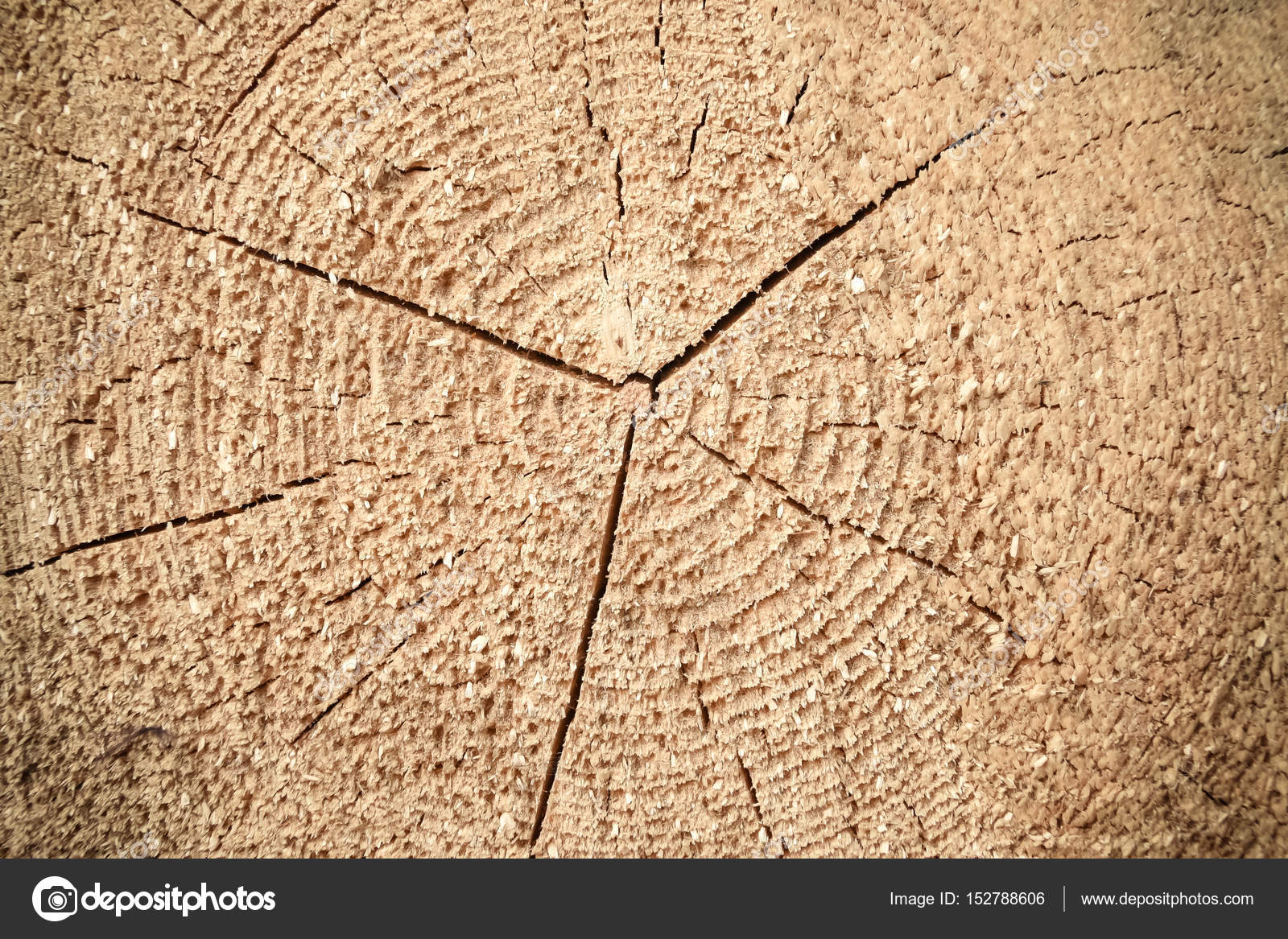 Textura de madera, corte de troncos — Foto de stock © kulkann #152788606