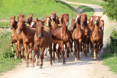 Thoroughbred horses canter across the bridge on a beautiful hors