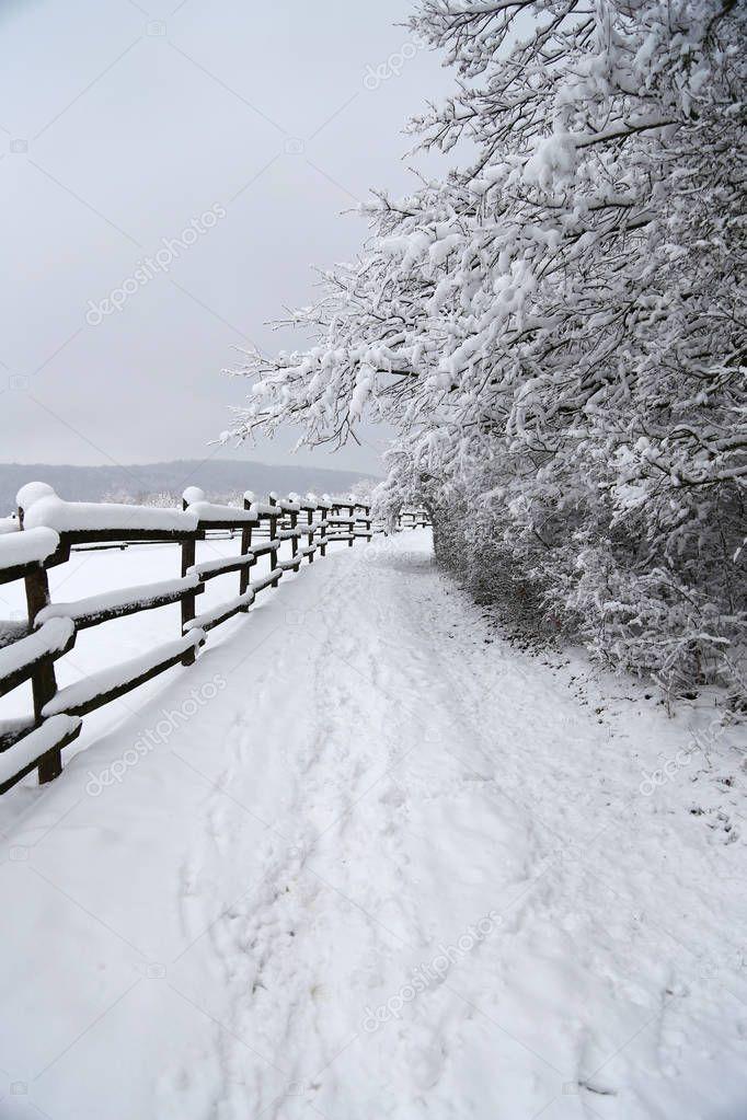 Vertical shot of winter corral landscape