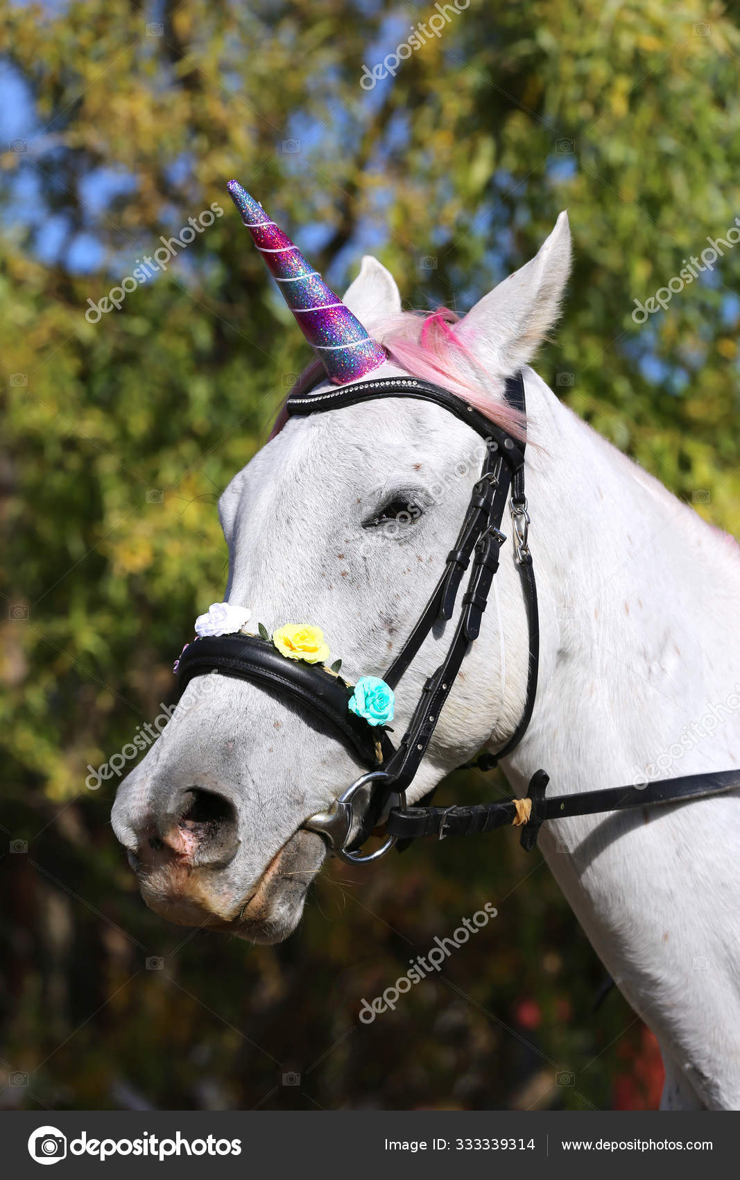 Beautiful Magical Unicorn Horse Realistic Photography Stock Photo C Accept001 333339314