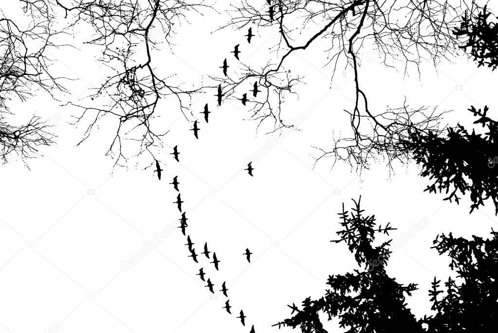 Birds cranes storks flying in a V shape formation. Isolated on white bright sky and against the background of trees.Vector Eps10