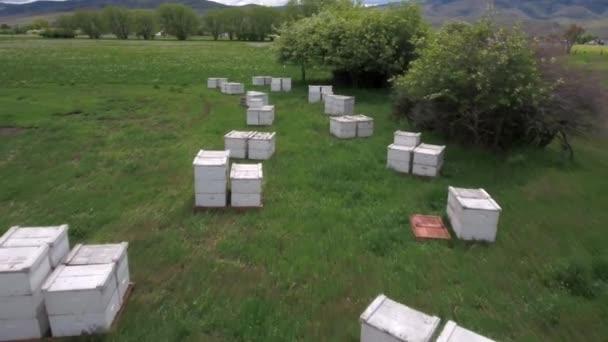 cajas de abejas en un campo Vdeo de stock jakerbreaker 146773131