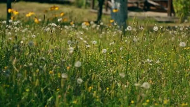 Pole z jarních květin při západu slunce ve vintage stylu